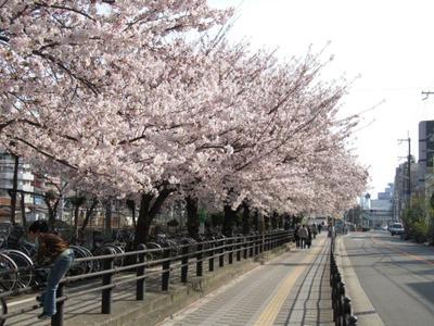Sakura201103