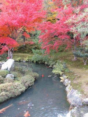 Tenryuji20111127062_2