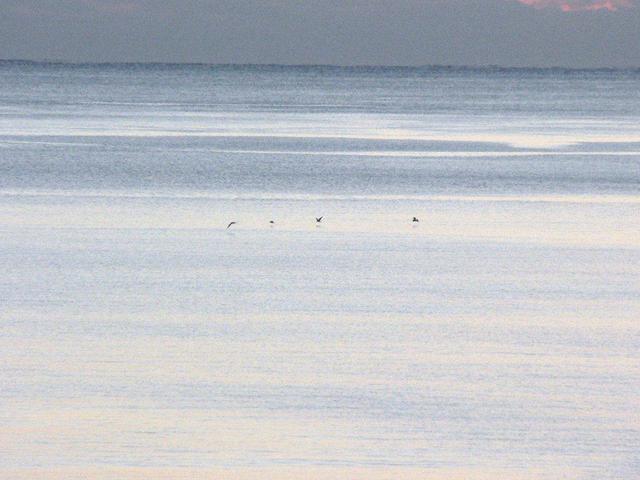 御浜の海(1月)